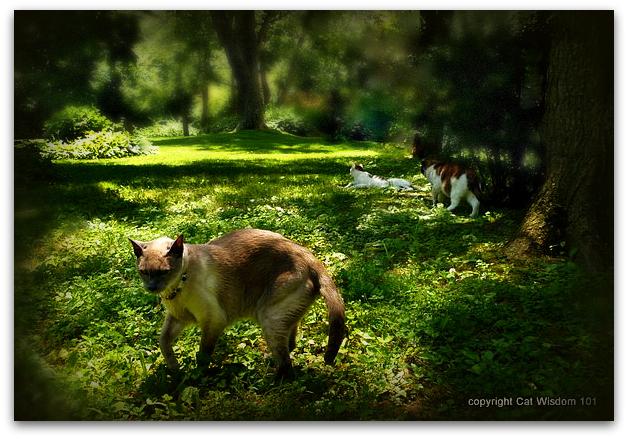 June-cats-garden