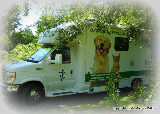 Mobile-vet-squad-clinic-Dr. Goldstein-westchester county-NY