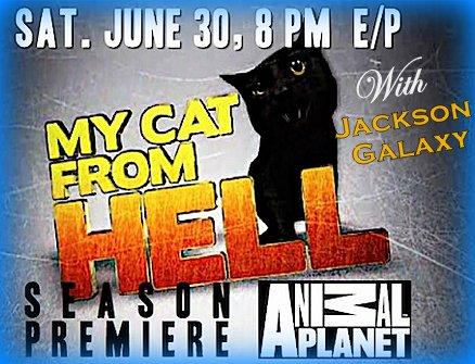 My-cat-from-hell-Jackson-galaxy-MCFH-season 3