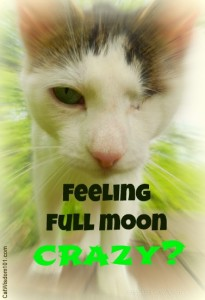 Odin-cat-full-moon-crazy