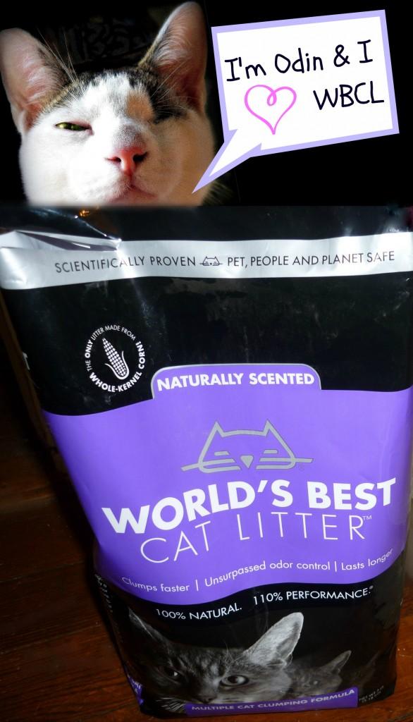 WBCL-cat-odin-Best-giveaway-cat-litter