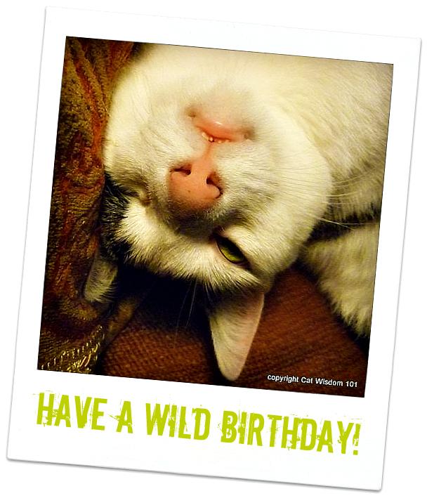 birthday-catnip-overdose-funny-odin-cat