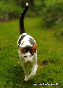 cat-hunting-walk-214x300 Cats: Hardwired to Hunt in 6 Steps