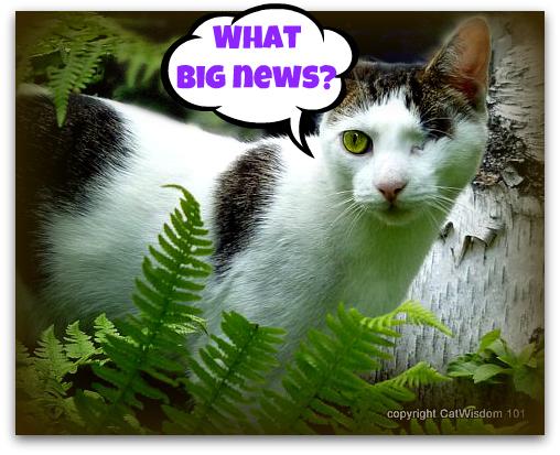 caturday-news-mews-cat-odin-ferns