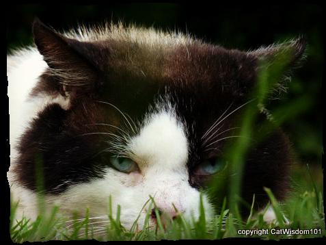 domino-feral-cat-garden