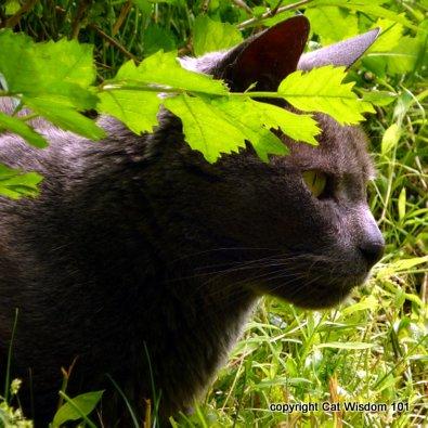 gris gris-cat-houdini