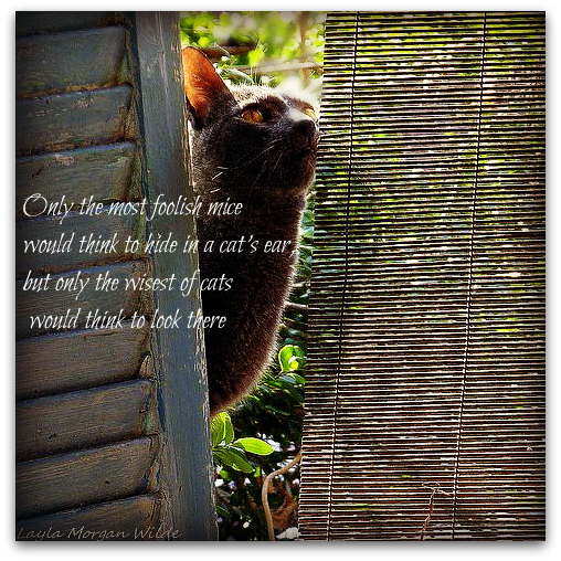 gris gris-cat-quote-mice-humor