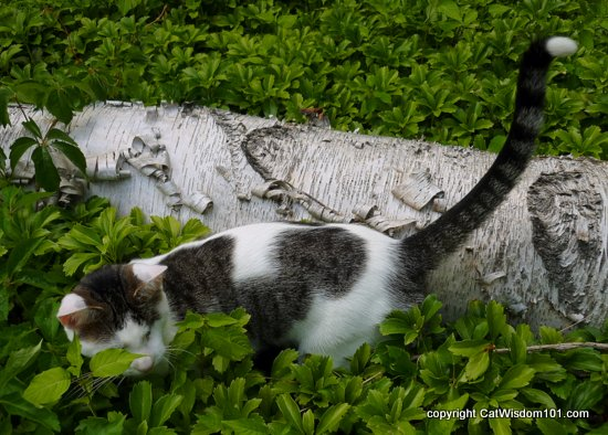 hunting-predatory-cats Cats: Hardwired to Hunt in 6 Steps