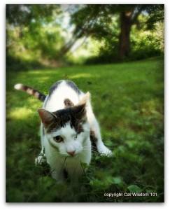 june-cat-digging-garden