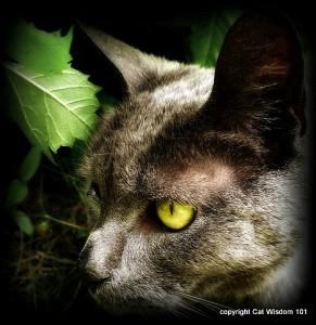 june-cat-garden-gris gris-wisdom