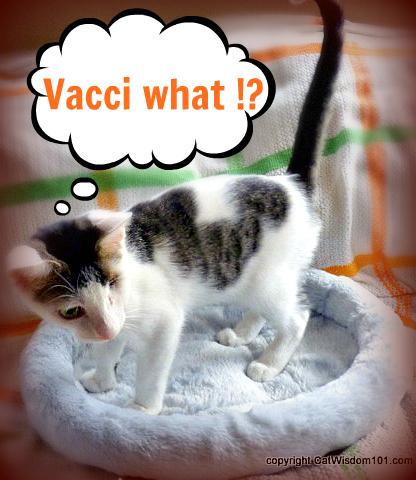 kitten-odin-vet-vaccinations