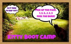 Kitty Boot camp-lol-cats-exercise