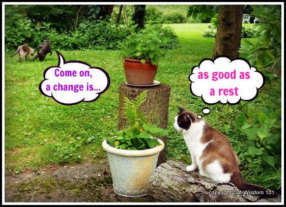 man cat-monday-merlin-quote-change-rest