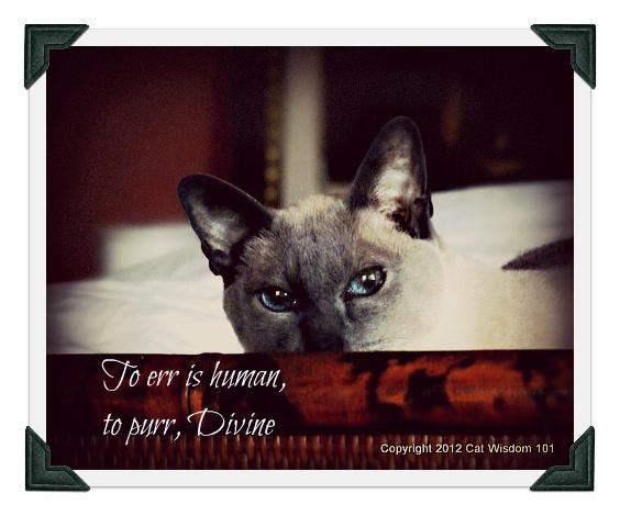 merlin-cat-cat wisdom-101-art-siamese-quote- purr
