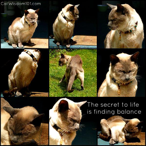 merlin-monday-montage-mancat-secret-life-cats
