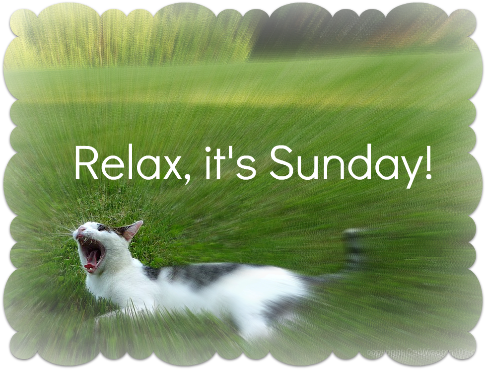 odin-cat-garden-yawn-quote-relax-sunday