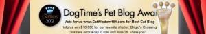 pettie-awards-dogtime media-pet-blog-cat wisdom 101-cat