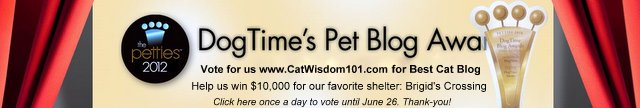 pettie-awards-dogtime media-pet-blog-cat wisdom 101-cat