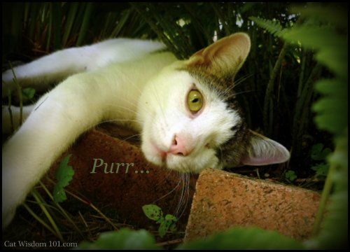 purring-cat-odin-garden-pleasure-pain