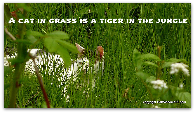 quote-cat-tiger-jungle-grass