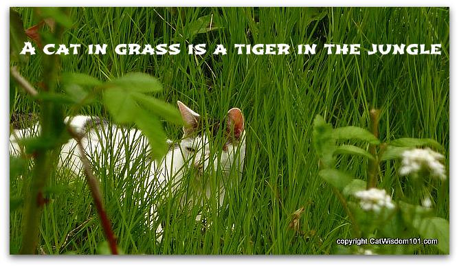 quote-cat-tiger-jungle-grass