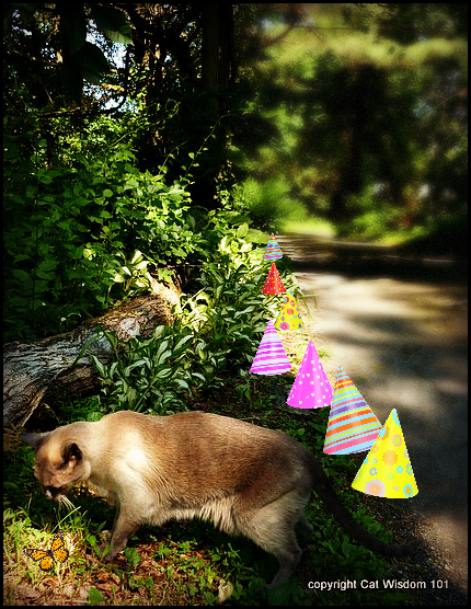 road-cat-garden-private-birthday-hats
