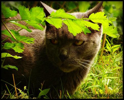 shadow-cat-gris gris-garden