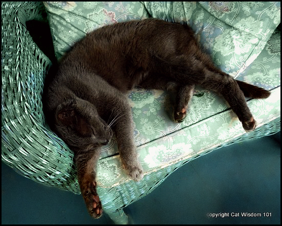 sleeping-cat-porch-art-gris gris