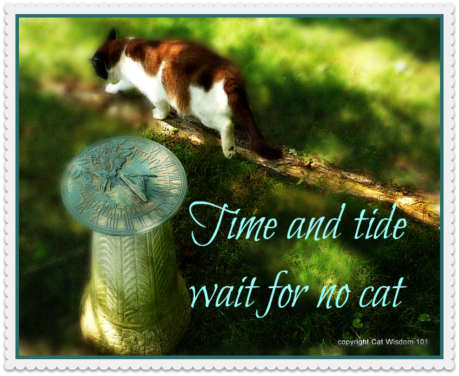 time-quote-summer-solstice-cat-sundial