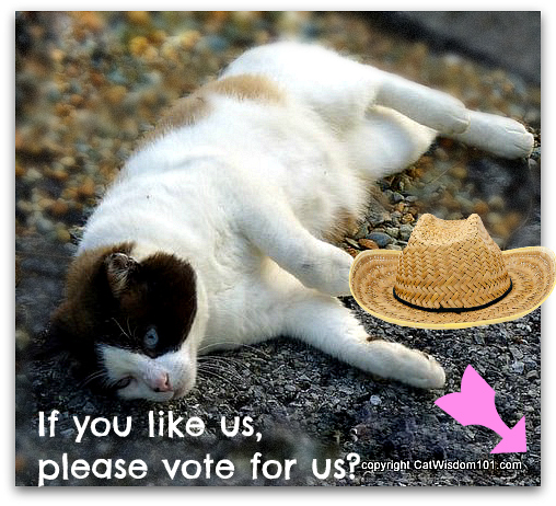 vote-petties-cat wisdom 101-domino