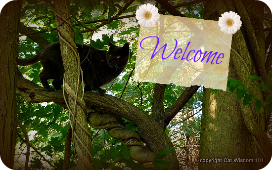 welcome-cat-trees-art-sign