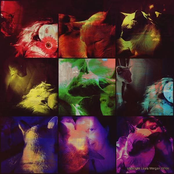 9-lives-cats-portrait-colors-art