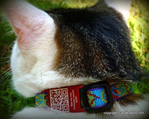FurCodes-cat-ID-odin