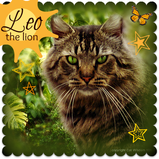 King-bc-cat-Leo-astrology-feline