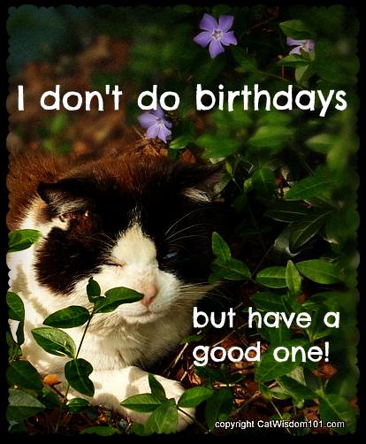 birthday-cat-domino-funny