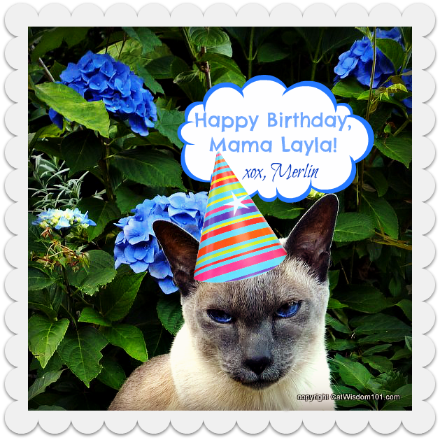 birthday-cat-monday-merlin-surprise