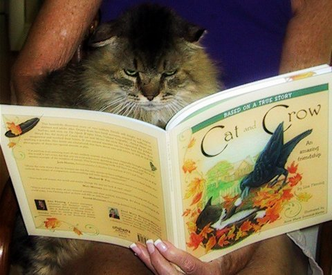 cat and crow-reading-book-cute