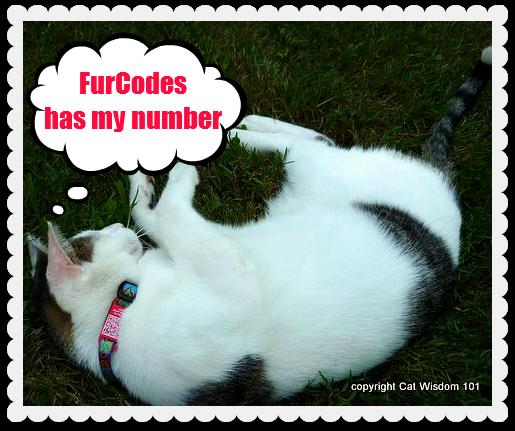 furcodes-ID-tag-cat-pets-odin