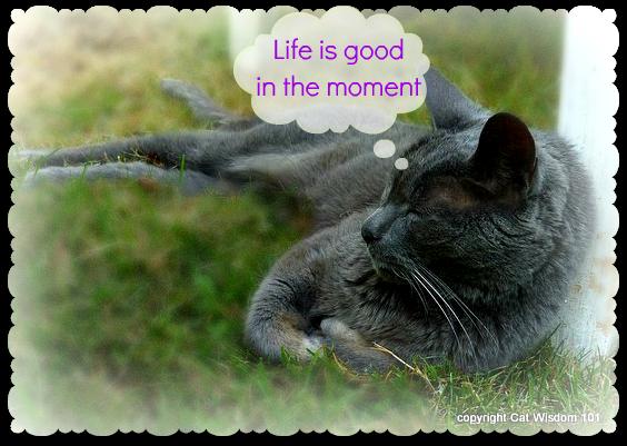 gris gris-napping-vote-pettie-award-cat-blog