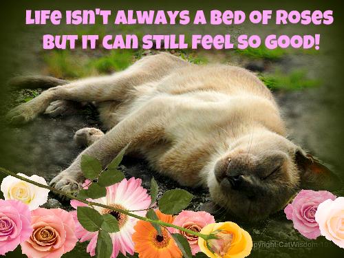 merlin-cat-sun-wisdom-bed-roses-quote