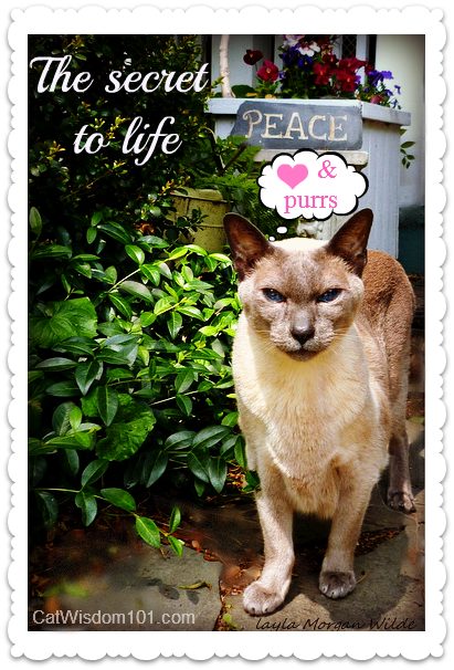 peace-cat-quote-siamese-wisdom