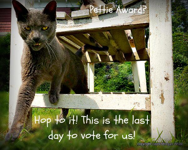 pettie-award-vote-quote-cats-cute