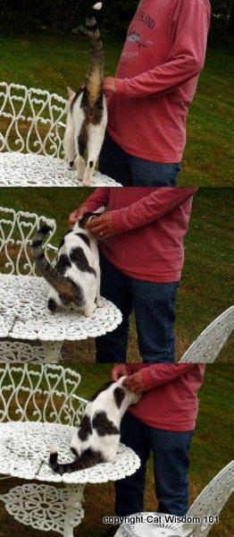 scent-bonding-human-cat