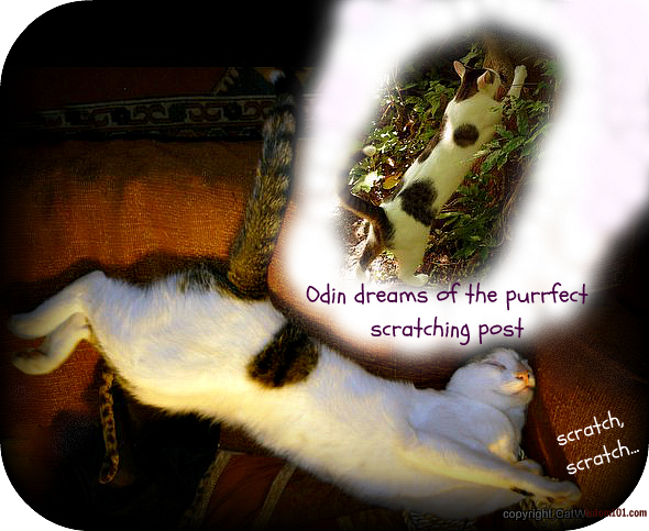 scratching-post-cat-dream-tips