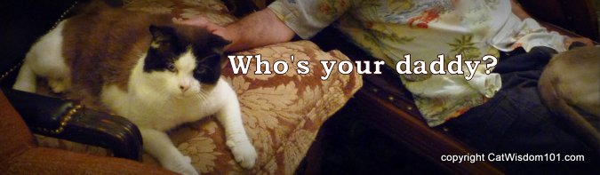 who's your daddy-cats-quote-cat dad