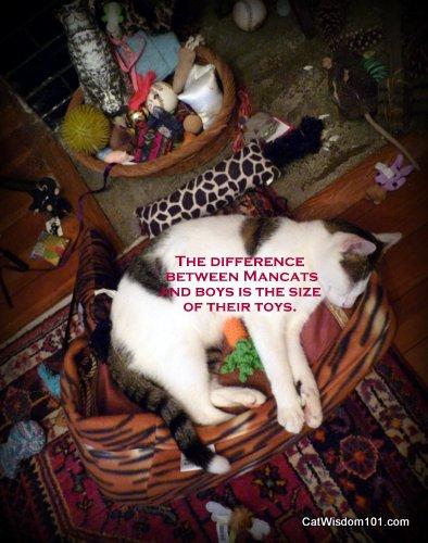 Cat-toys-odin-quote-men-size-mancat