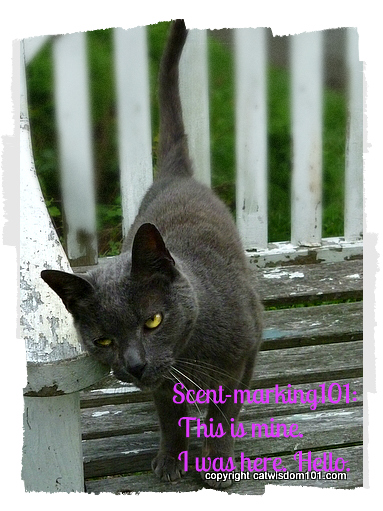 Gris Gris- scent marking-cat