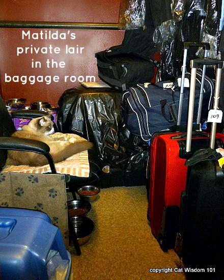 Matilda-cat-2012-algonquin-baggage room-nyc-hotel