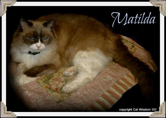 Matilda-cat-birthday-algonquin-2012