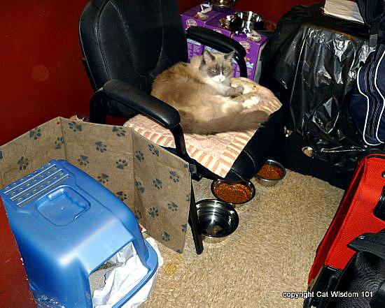 Matilda-cat-birthday-algonquin